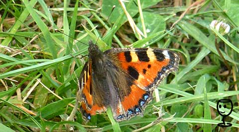 P1170164 Motýl