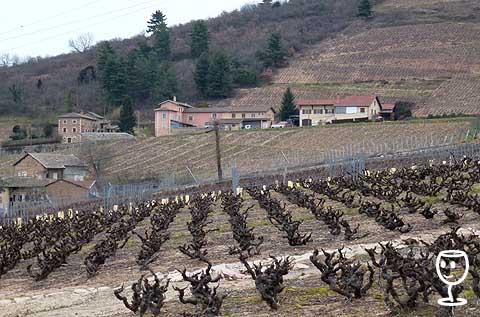 P1190824 kopce za Fleurie, Poncié