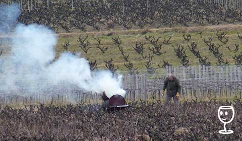 P1190830 pálení dřeva ve vinohradu
