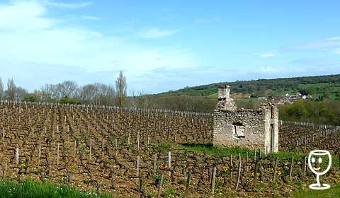 P1200542 Vinice u Santenay