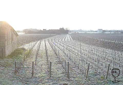 blog P1280059 vinice s kontralichtem