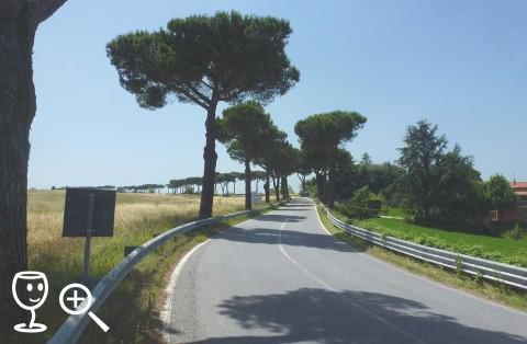 BLOG P1290350 Cesta Umbria