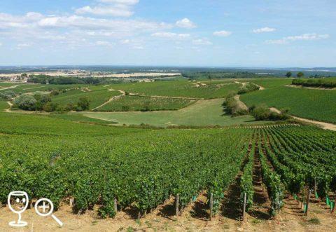 BLOG P1230163 Montagny vinice