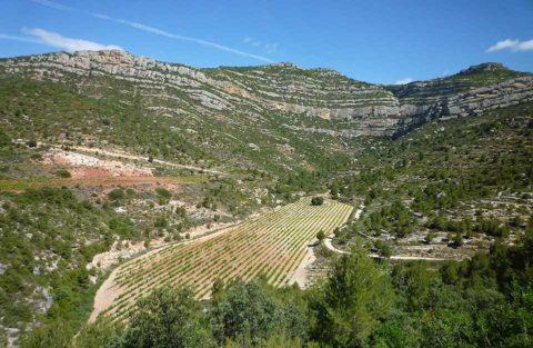 BL Montsant, ale vinice Priorat