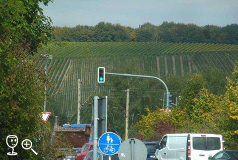 BL P1340214 vinice u Randersackeru