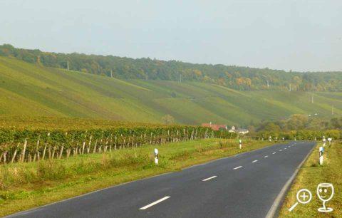 BL P1340306 vinice za Escherndorfem