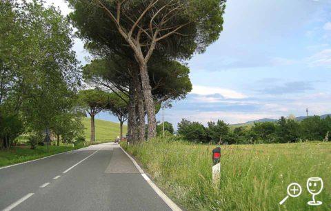 BL Img_4191 Silnice s piniemi