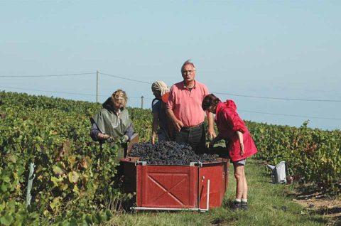 960 Jean Joly Harvest