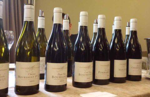 BL P1410284 Modni prehlidka Bourgogne